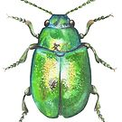 Dock Beetle Painting by Theodora Gould