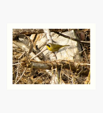 Common Yellowthroat ~ Male Art Print