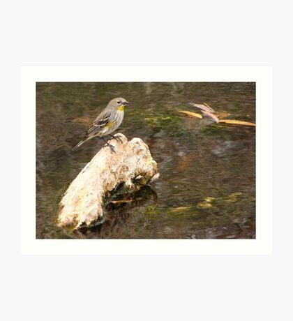 Yellow-rumped Warbler (Audubon's) Art Print