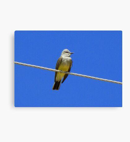 Western Kingbird ~ Adult Canvas Print