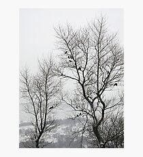 Crows on bare trees in winter Photographic Print