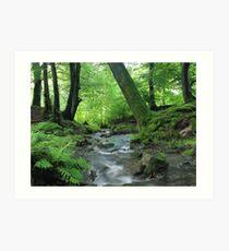 Woodland stream in summer Art Print