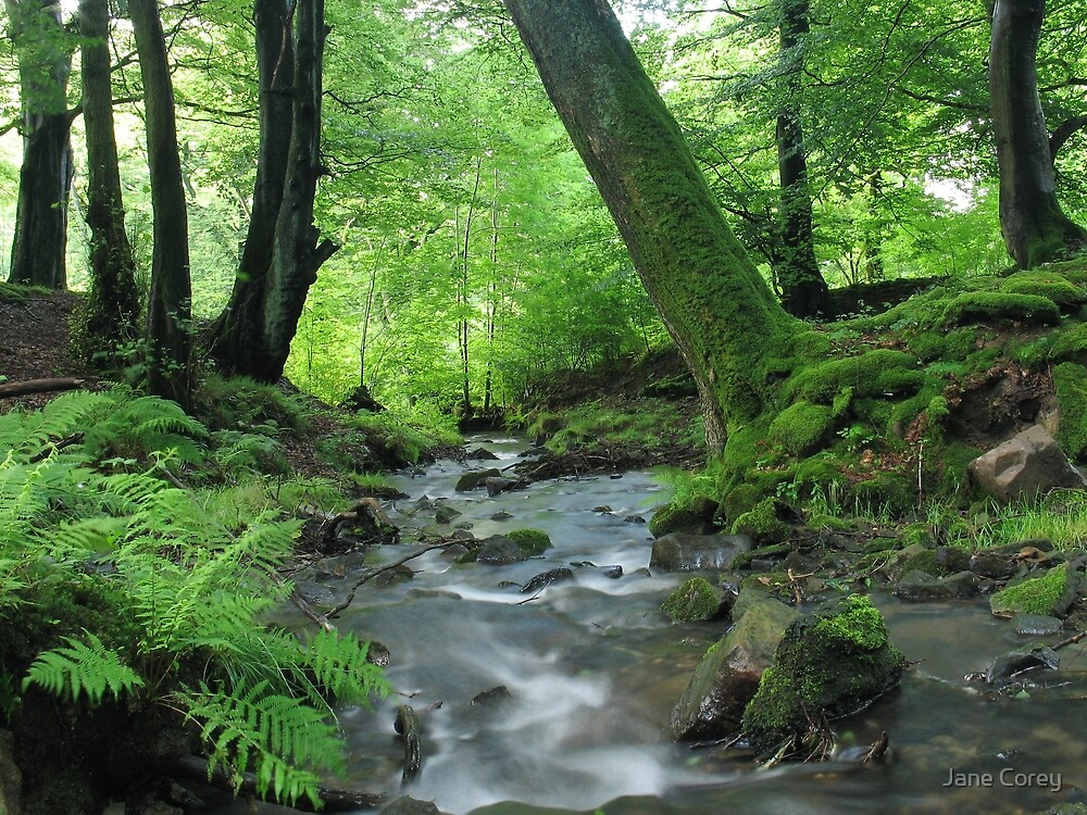 Quot Woodland Stream In Summer Quot By Jane Corey Redbubble