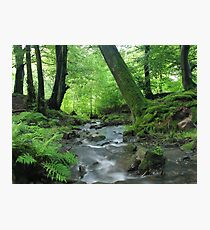 Woodland stream in summer Photographic Print