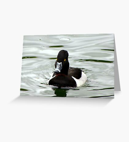 Ring-necked ~ Male Greeting Card