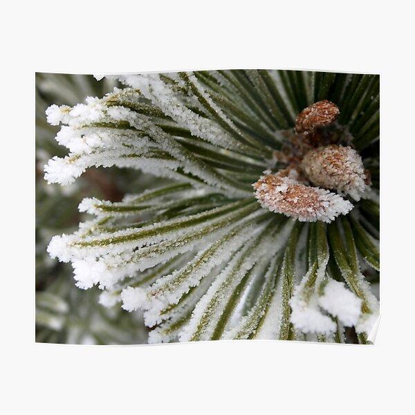 Pine Pogo Detail Poster