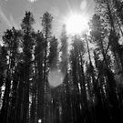 Through The Trees by Ellinor Advincula