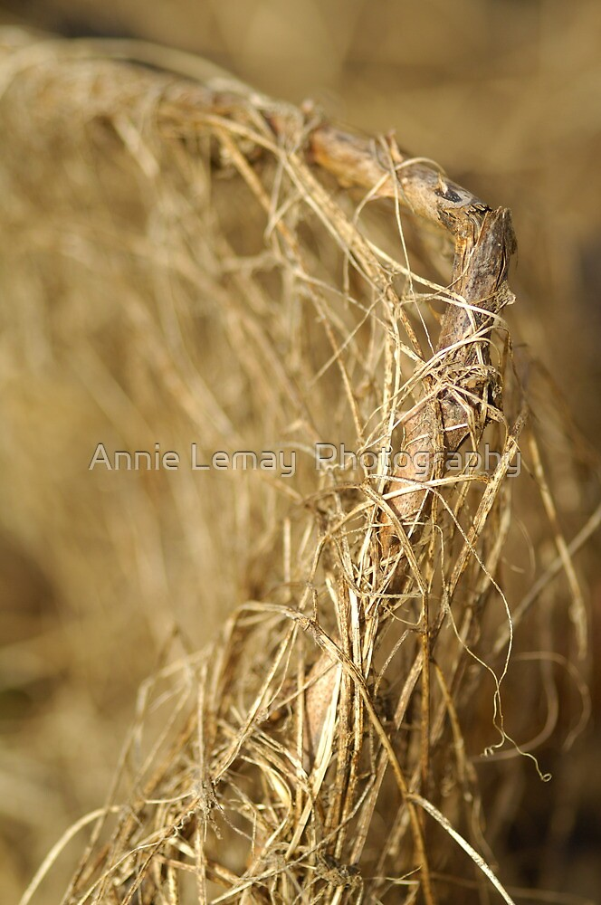 Nature's Weave by Annie Lemay  Photography