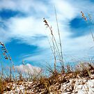 Sea Oats by Phillip M. Burrow