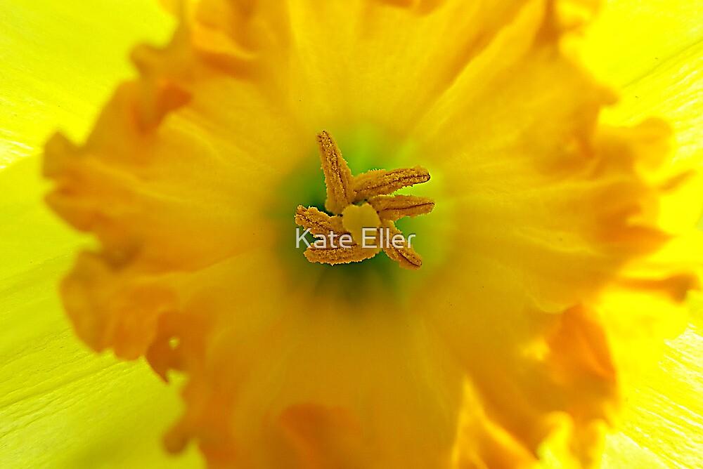 Daffodil Central Intelligence by Kate Eller