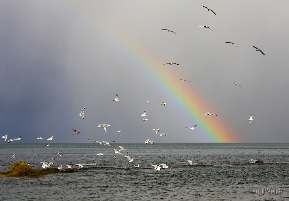 Flight of the Rainbow by TerrillWelch