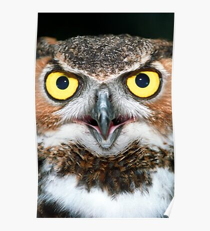 """""""Bright Eyes"""" - Great Horned Owl Poster"""