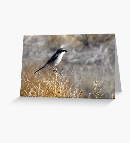 Loggerhead Shrike Greeting Card
