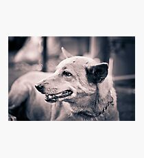 Dogs. Photographic Print