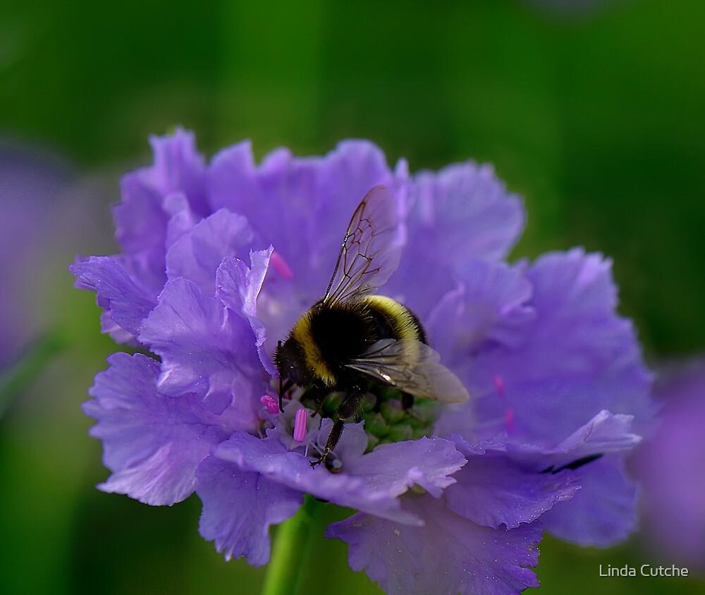 Bee Heaven by Linda Cutche