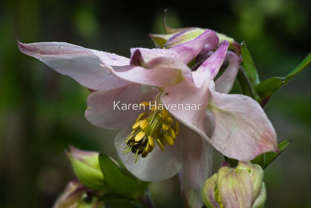 Delicate Pink by Karen Havenaar