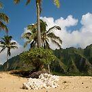 Serene Hawaiian Beach, O'ahu by Chrissy Ferguson