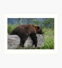 Bear Sleeping Art Print