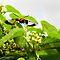 BUG/BIRD HOVERING NEAR A FLOWER/FOLIAGE