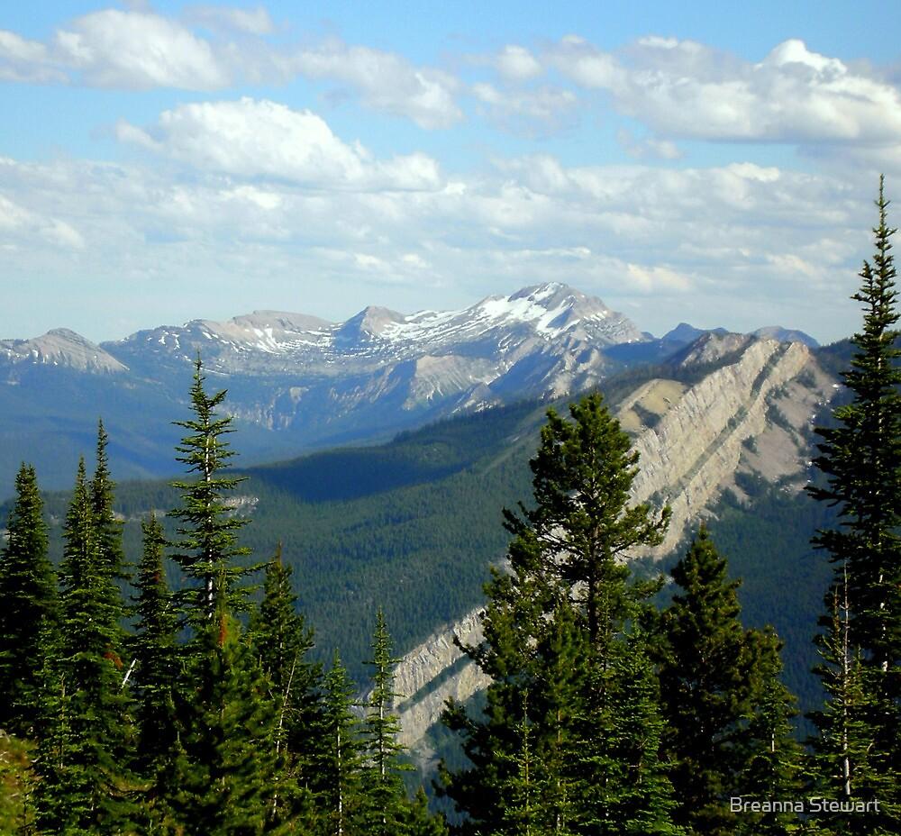 Schafer Creek Trail- Great Bear Wilderness, Montana by Breanna Stewart