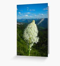 """Home of the Bear grass""- Great Bear WIlderness, Montana Greeting Card"