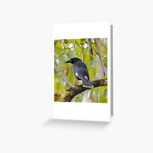 WO ~ SC ~ ARTAMIDAE ~ CURRAWONG ~ Pied Currawong by David Irwin 011119 Greeting Card