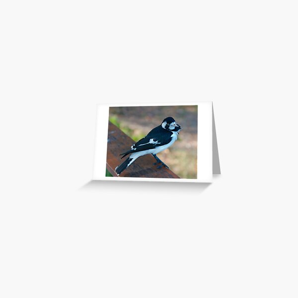 WO ~ SC ~ FANTAIL ~ Magpie-Lark by David Irwin 041119 Greeting Card