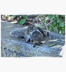 Hugging Squirrels Poster