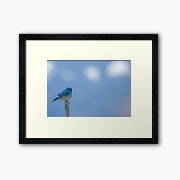 Bluebird Of Happiness... Framed Art Print