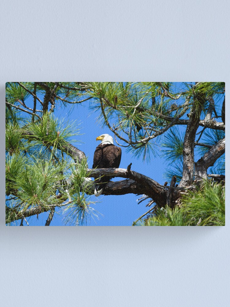 Alternate view of American Bald Eagle Canvas Print