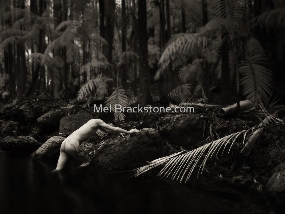 The rainforest by Mel Brackstone.com