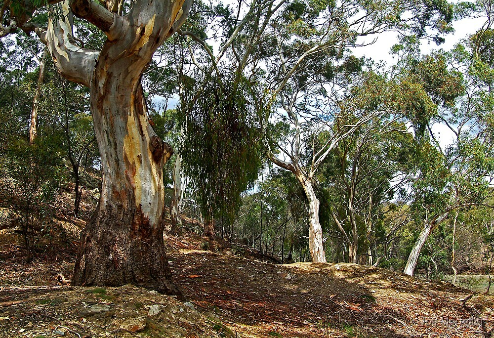 Stieglitz Bushland by Joe Mortelliti