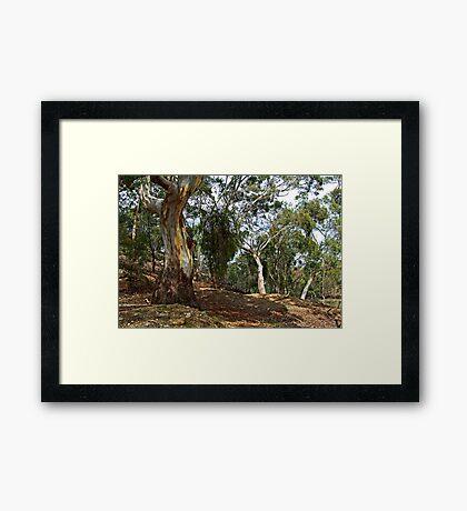 Stieglitz Bushland Framed Print