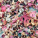 Autumn Fall leaves red, oranges, browns curly on the ground by SJMcDermott