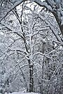 New Fallen Snow by photosbyflood
