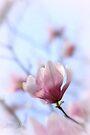 Spring Blooms Anew by Briana McNair