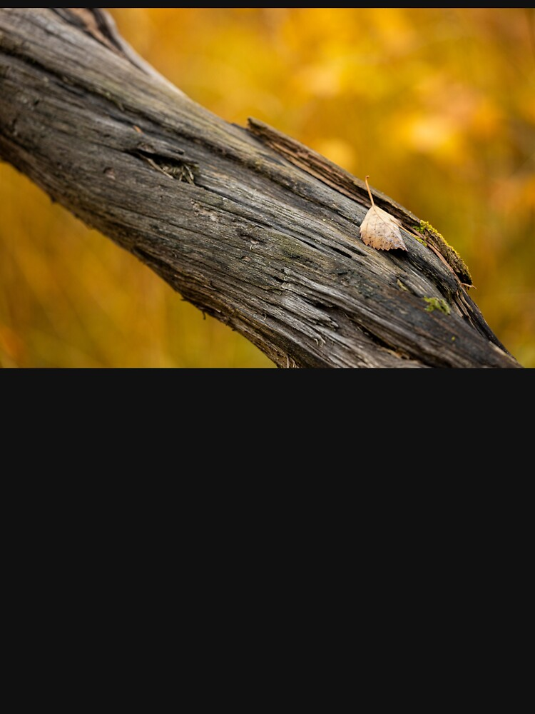 Leaf on dead tree in autumn forest by Juhku