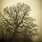 Lonesome tree by NicoleBPhotos