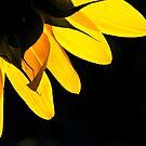 Yellow on Black by Karen Havenaar