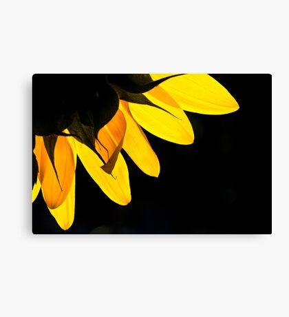 Yellow on Black Canvas Print