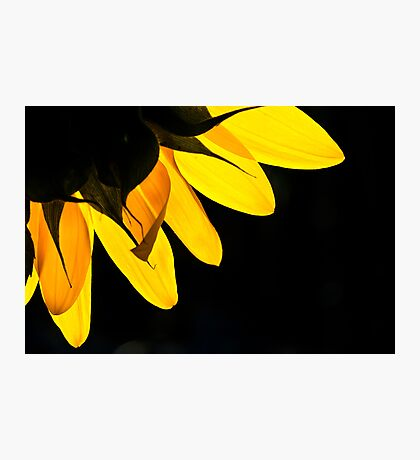 Yellow on Black Photographic Print