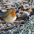 Robin on a Frosty Day by Mark Greenwood