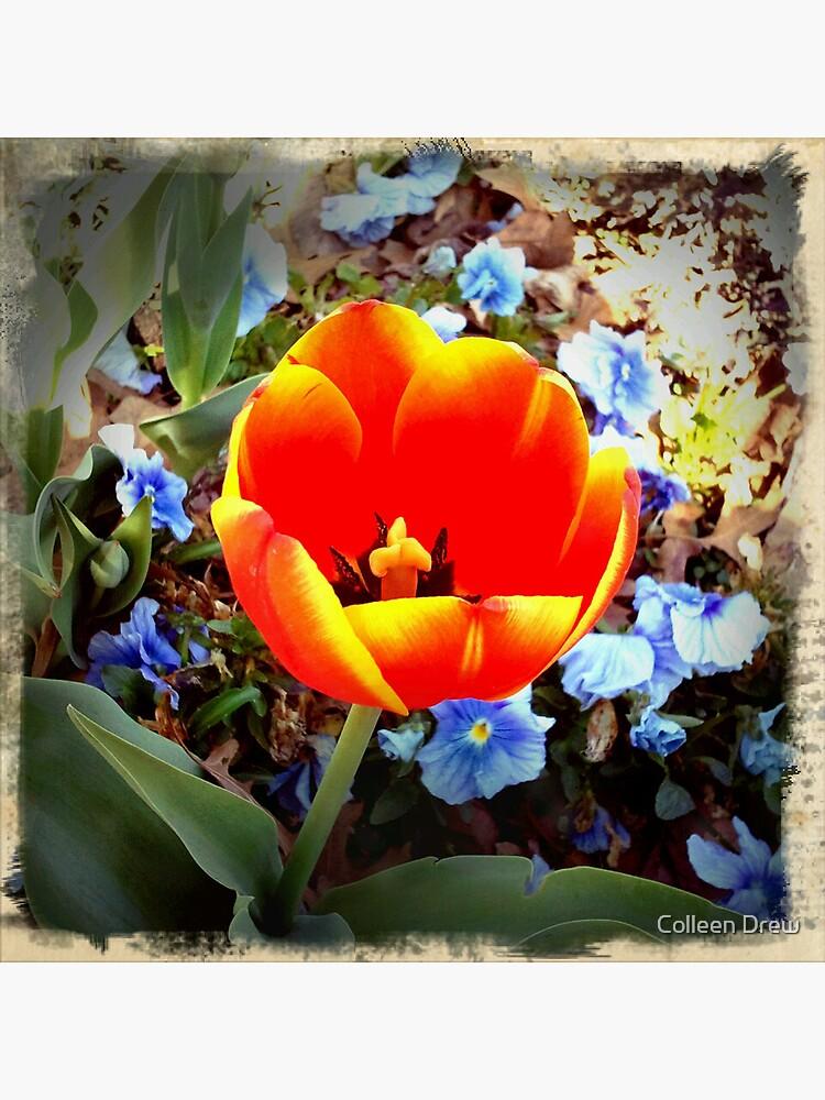 Tulip by colgdrew