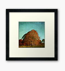 trees in the fall Framed Print