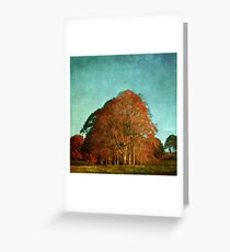 trees in the fall Greeting Card