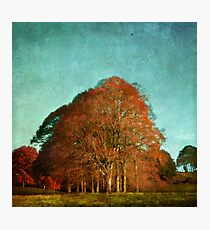 trees in the fall Photographic Print