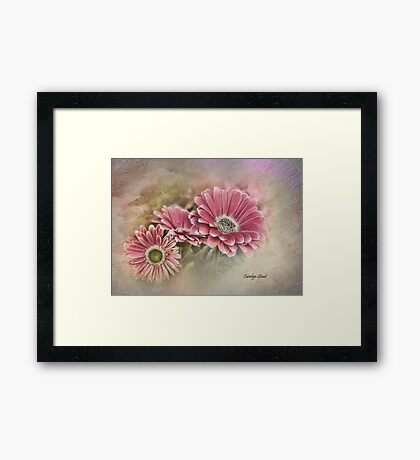 Pink Bloomers Framed Print