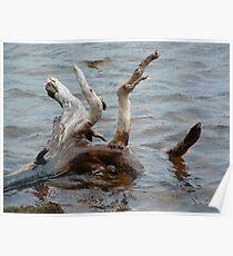 Driftwood Loch Poster