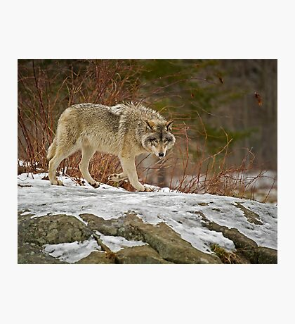 With Confidence Photographic Print