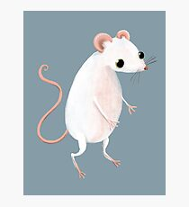 Cute little white mouse Photographic Print